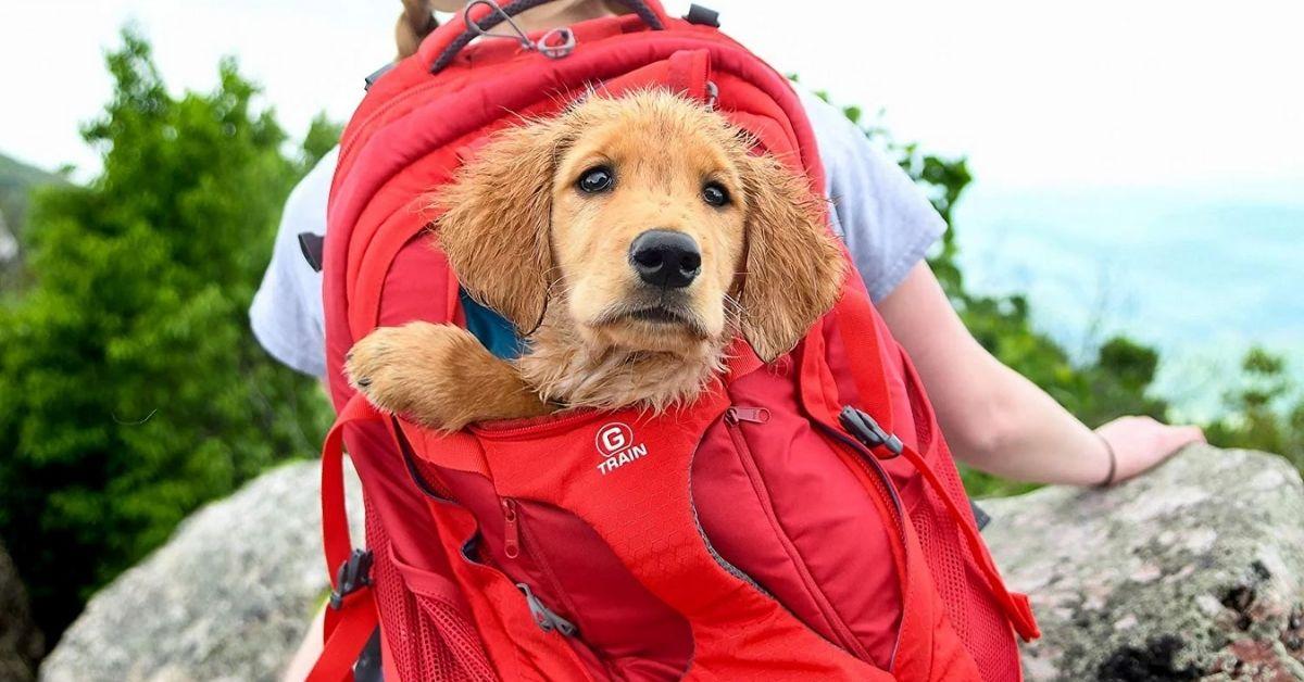 5 Best Dog Carrier Backpacks for Hiking, Travel or Walking