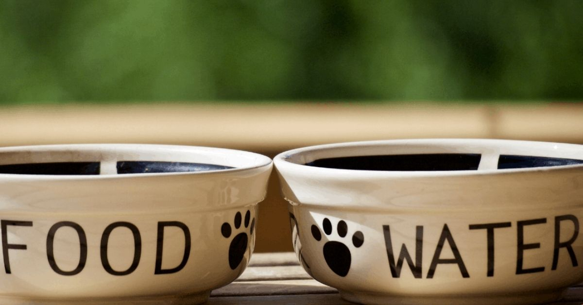 A Guide to Choose & Clean the Best Dog Food Bowls