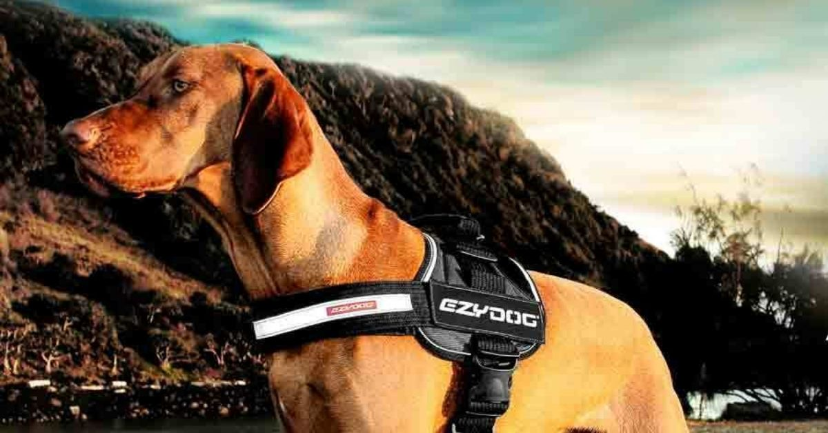 Best Dog Hiking Harnesses