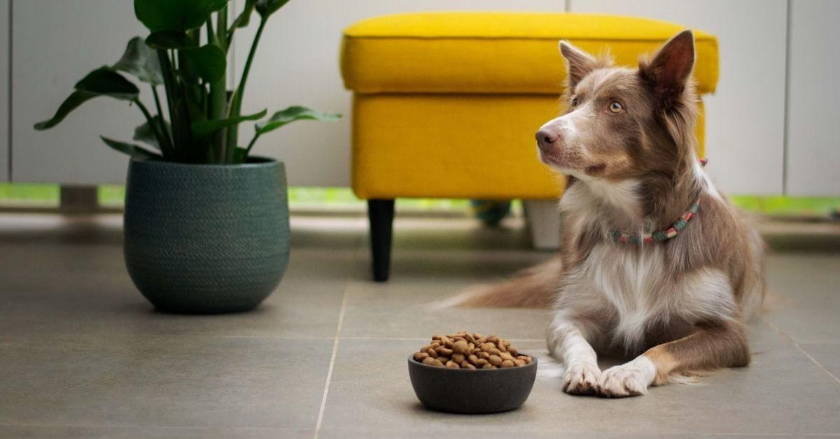Best High Fiber Dog Food Brands