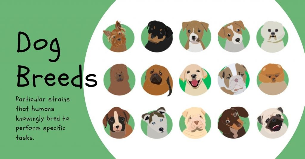 Dog Breeds A to Z: A Complete Alphabetical List of Dog Breeds That Start With A - Z