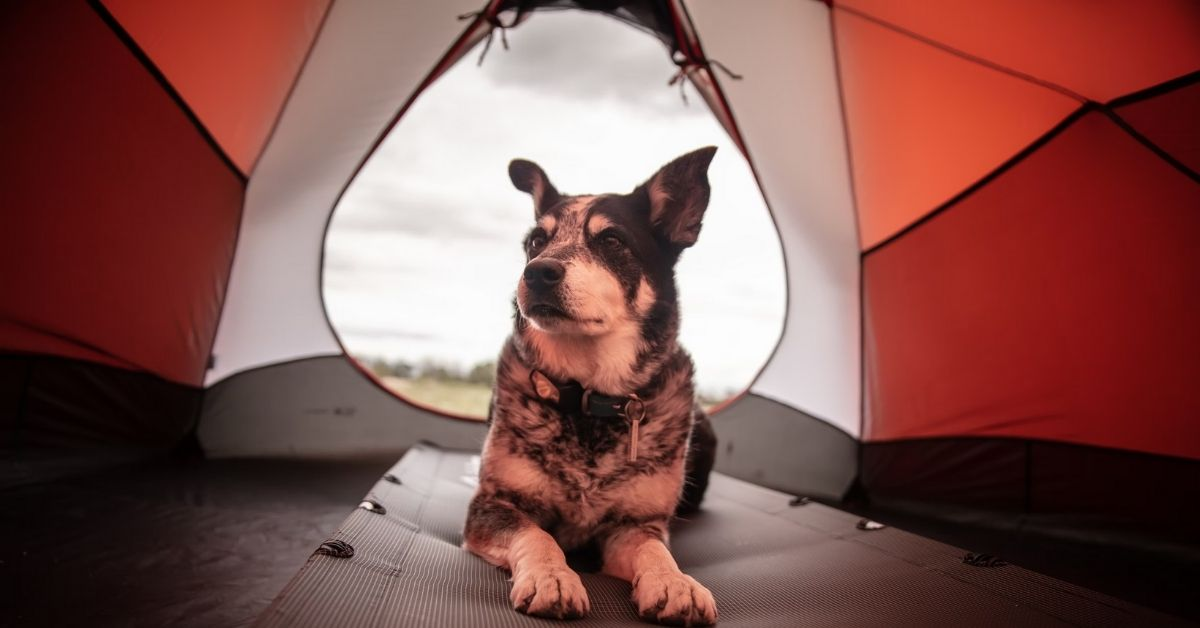 How To Camp With a Dog - A Guide to Camping with Dogs
