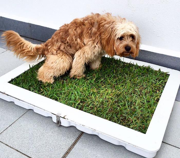 Tips for Cleaning a Dog Litter Box - Puplore