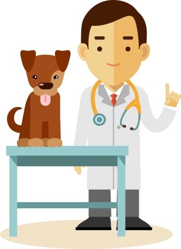 veterinary dog care