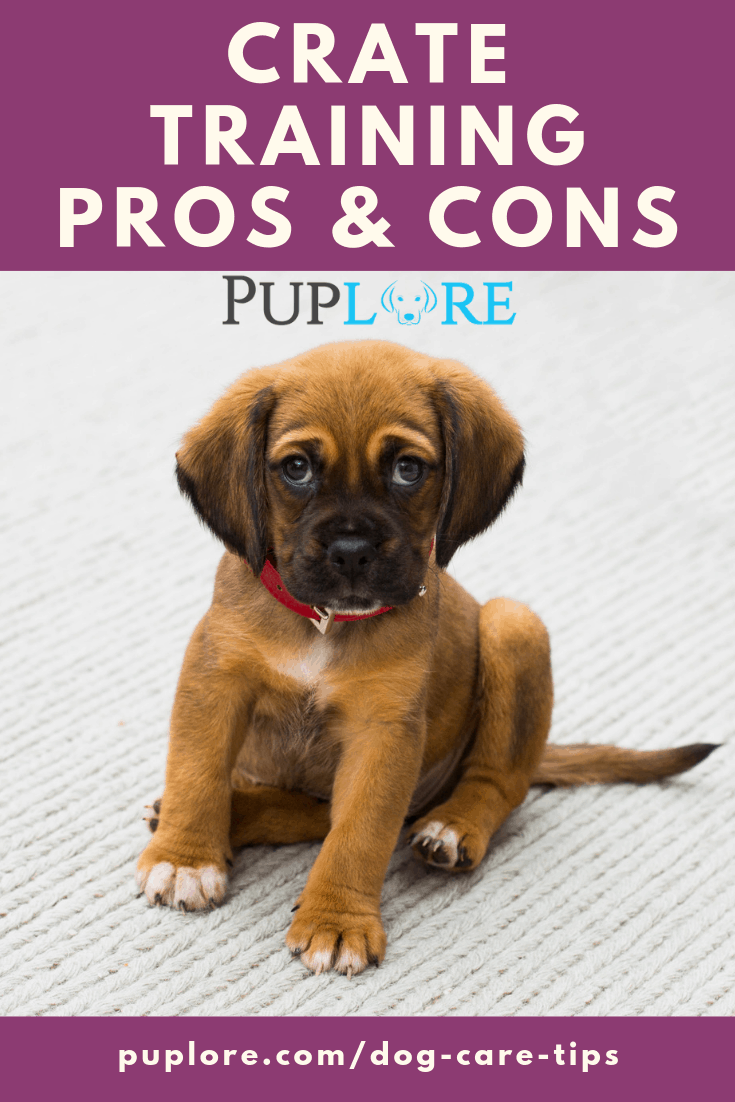 Dog Crate Training Pros and Cons