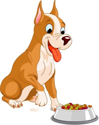 dog ready to eat food