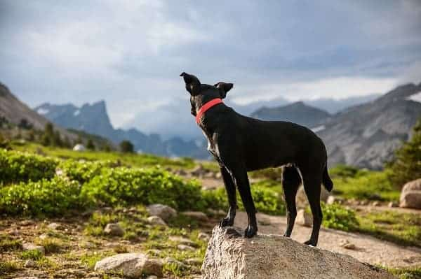 How far can a dog hike in a day - Puplore.com