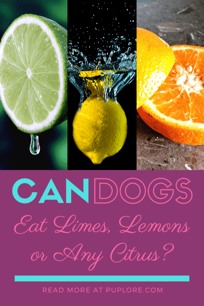 Is citrus toxic to dogs