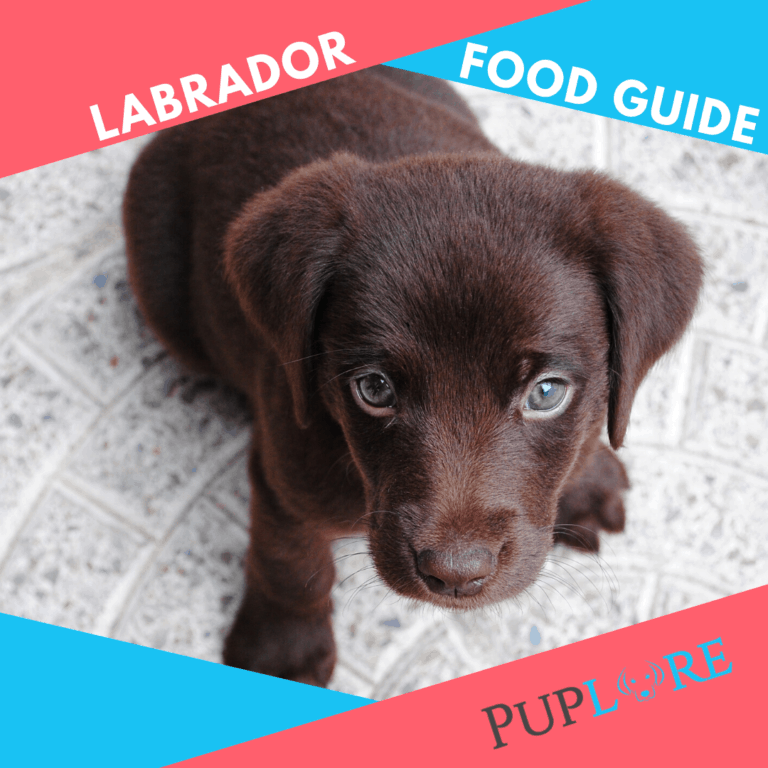 How Much to Feed a Lab Puppy? 2021 Labrador Food Guide