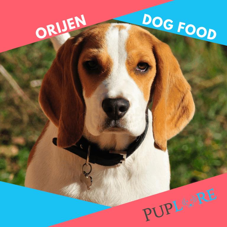 Orijen Dog Food Reviews 2021: Is it the Best Dry Dog Food?