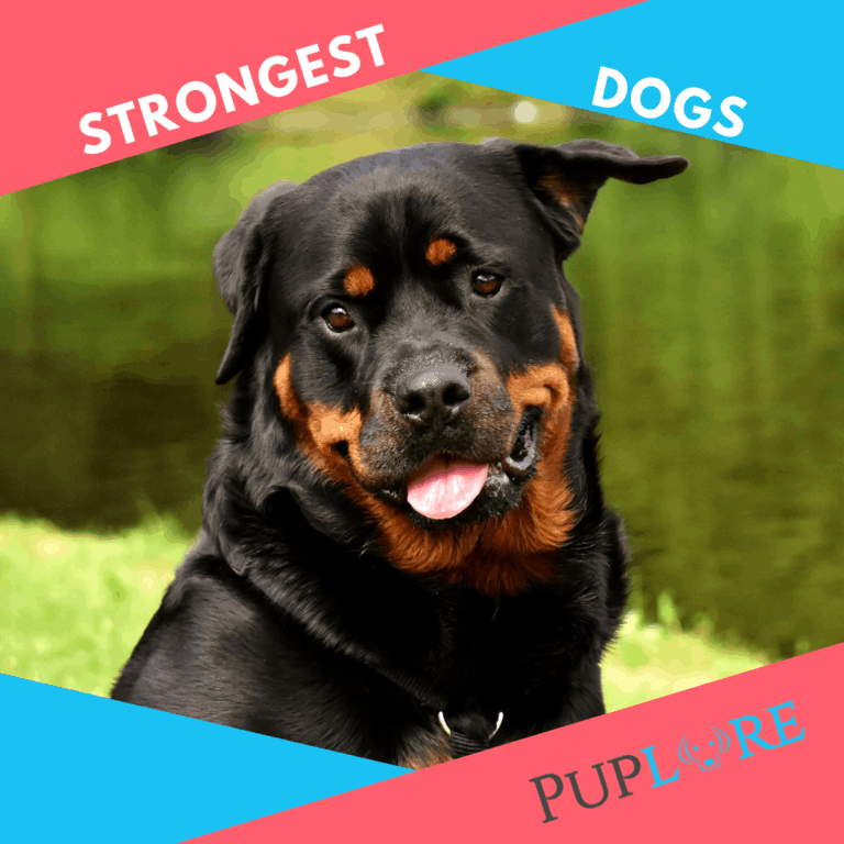 24 of the World's Strongest Dog Breeds [Pound for Pound]
